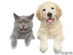 Добавки вкусо-ароматические для домашних животных .