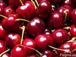 Домашние вишни
