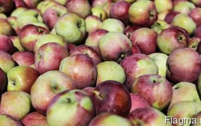 Домашние яблоки