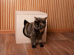Домик для кошки из фанеры продам, Харьков, доставка - photo 2