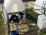 Домик для содержания теленка - photo 1