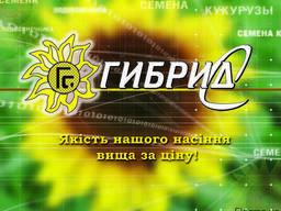 Семена подсолнечника Екватор (IMI)