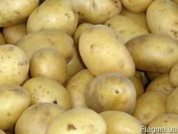 Доставка от 100 кг Новой почтой элитных сортов картофеля