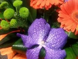 Доставка цветов Днепропетровск