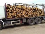 Дрова Дубовые колотые и кругляк с доставкой Буча Киев - фото 5
