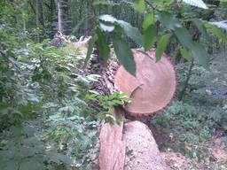 Дрова дубовые метровка. Киев и Область