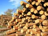 Дрова чурки колотые купить дуб, акация, сосна с доставкой - фото 6