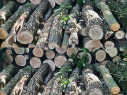 Дрова твердых пород дуб ясень граб акация