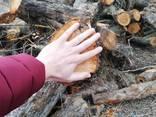 Дрова яблони, фруктовых пород, чурками от 50 до 100 см. диаметр от 12см. - фото 5