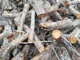 Дрова яблони, фруктовых пород, чурками от 50 до 100 см. диаметр от 12см. - фото 6