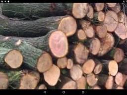 Дуб, дрова техсировина