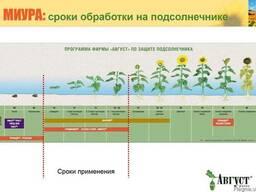 Эффективные гербициды на подсолнух - Сальса, Миура, Селект,