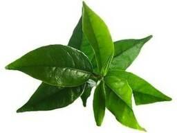 Эфирное масло чайного дерева. Натуральное. Ожидаем
