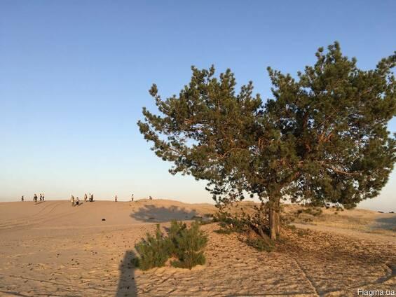 Экскурсии на родину Репина в Чугуев и Кицевскую пустыню