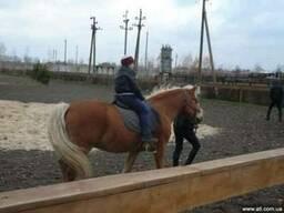 Экскурсия на Петриковский конный завод (с.Сотницкое)