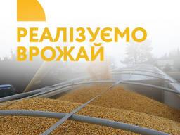 Експорт зерна, експорт врожаю, продаж зерна