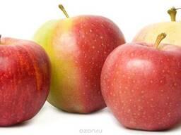 Экстракт плодов Яблока 1 л