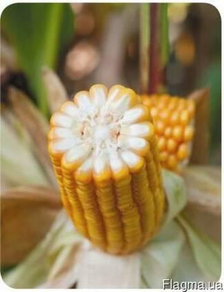 ЕС Трио купить,Семена кукурузы ЕС Трио цена