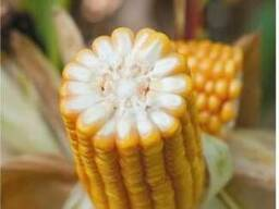ЕС Трио купить, Семена кукурузы ЕС Трио цена