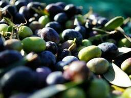 EV - Olive Squalene (Olive Oil Unsaponifiables)