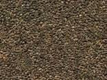 Фацелия семена медонос - фото 1