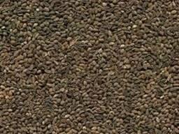 Фацелия семена медонос