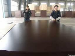Фанера ламинированая 21мм тополь производства Китай