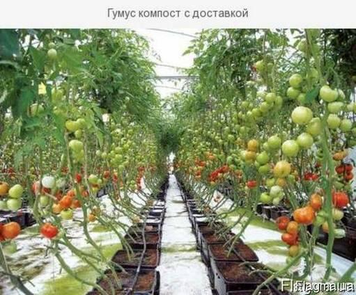 Ферментированный Компост