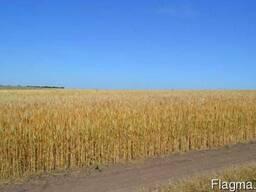 Фермерское хозяйство волынская область