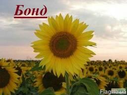 Фірма «Гран» пропонує насіння гібриду соняшнику Бонд