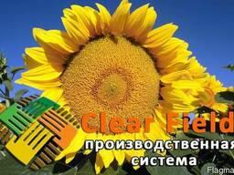Флорими (A-G) Clearfield гибрид подсолнечника