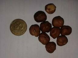 Фундук 13-15; 15 сырой, жаренный