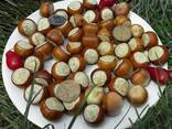 Фундук Трапезунд семена для проращивания - фото 1