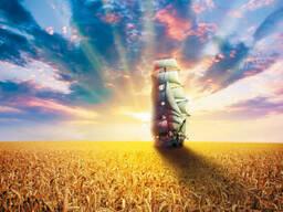 Фунгіцид для зернових Вареон