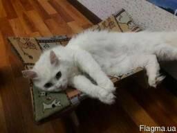 Гамак для кота, гамак для кошки, гамак для кошек.