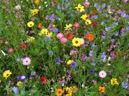 Газон с цветами (мавританский) 25%цветов