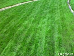Газонна трава Спорт