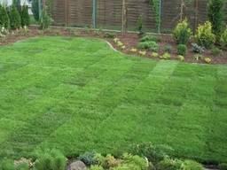 Посев газона, уход за участком, озеленение территории.
