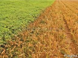 Гербицид досходовый для подсолнечника и кукурузы