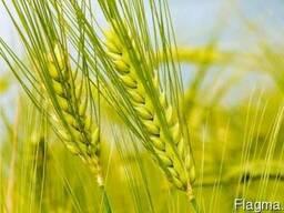 Гербицид на пшеницу, ячмень - Гранстар, Прима, Хармони,Агент