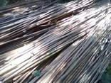 Закупаем ветки лещины - фото 1