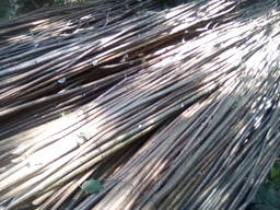 Гибкие ветки лещины для плетения