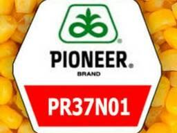 Гибрид кукурузы Пионер ПР37Н01
