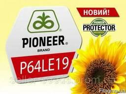 Семена Подсолнечника Пионер П64ЛЕ19 (Pioneer P64LE19) Акция