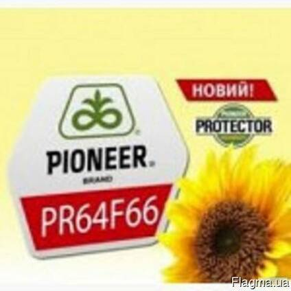 Гибрид подсолнечника PR64F66/ПР64Ф66 CRU
