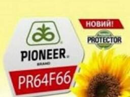 Гибрид подсолнечника PR64F66/ПР64Ф66 США