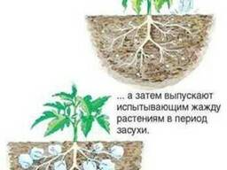 Гидрогель для выращивания грибов