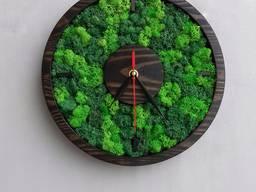 Годинник з стабілізованим мохом