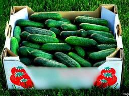 Гофролоток для овощей и фрукты усиленный 357х285х132мм