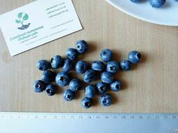 Голубика семена (10 штук) насіння лохини, косточка, семечка.